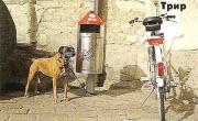 Европейская классика взглядом собаковода