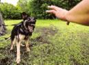 Как мы научились боятся собак